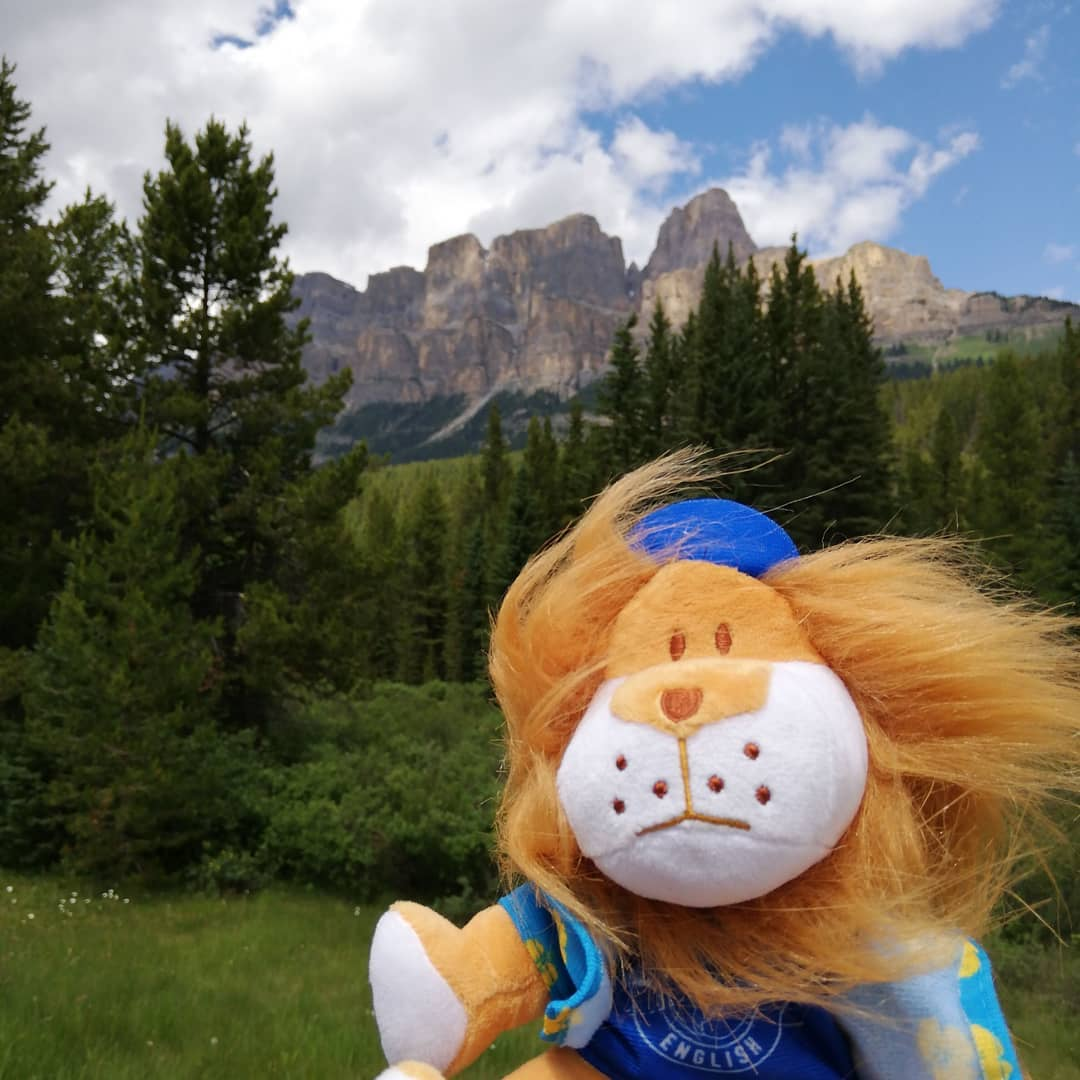 Leroy the lion in Calgary