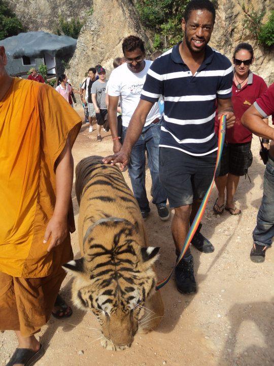 Walking a tiger in Thailand